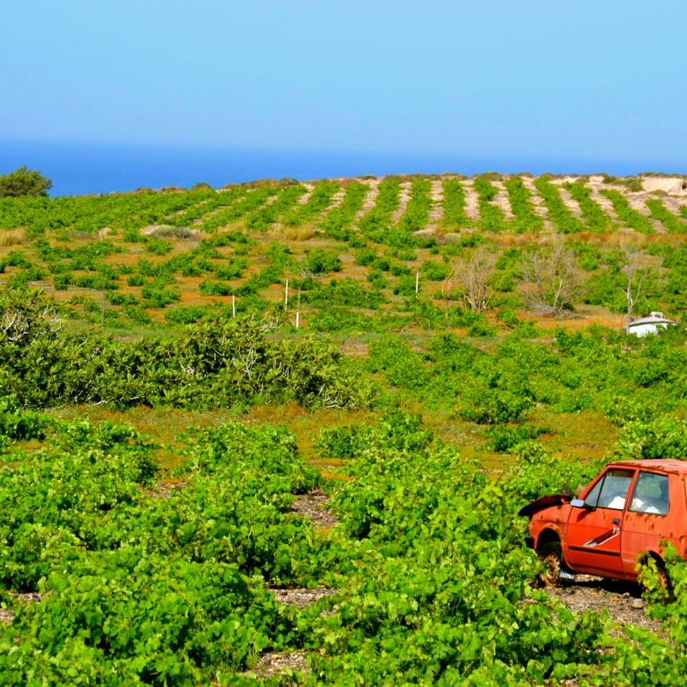 abandoned car in big field, Naxos Island, Greece