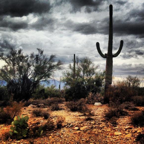 Cactus. Tucson, Arizona