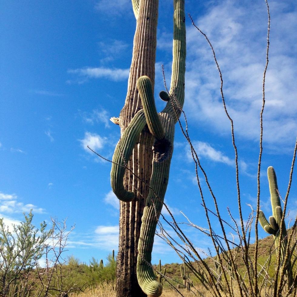 No idea what's going on. Tonto National Park. Mesa, Arizona