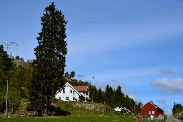 The traditional Norwegian farm where I am volunteering.
