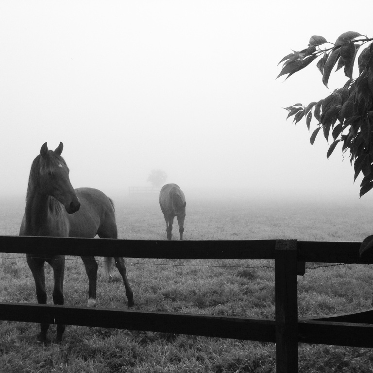 One foggy Friday morning @ Knockara Stables