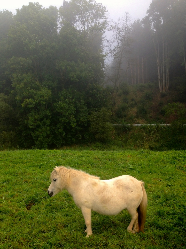 The magical white pony