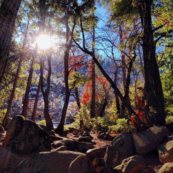 Tall trees, small me. Yosemite.