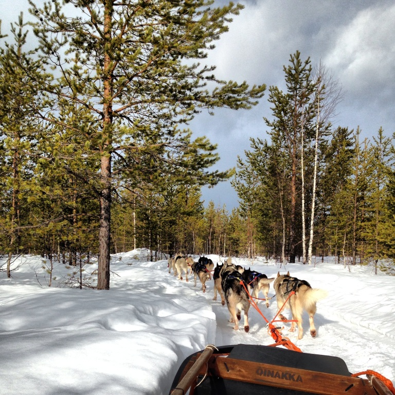Riding with the huskies, Tiainen, Finland.