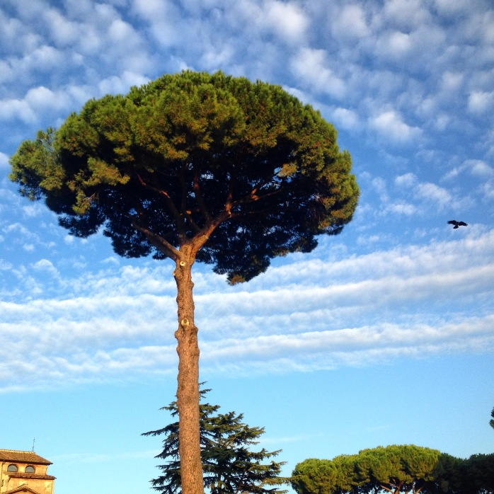 And the tree stands alone. Rome, Italy