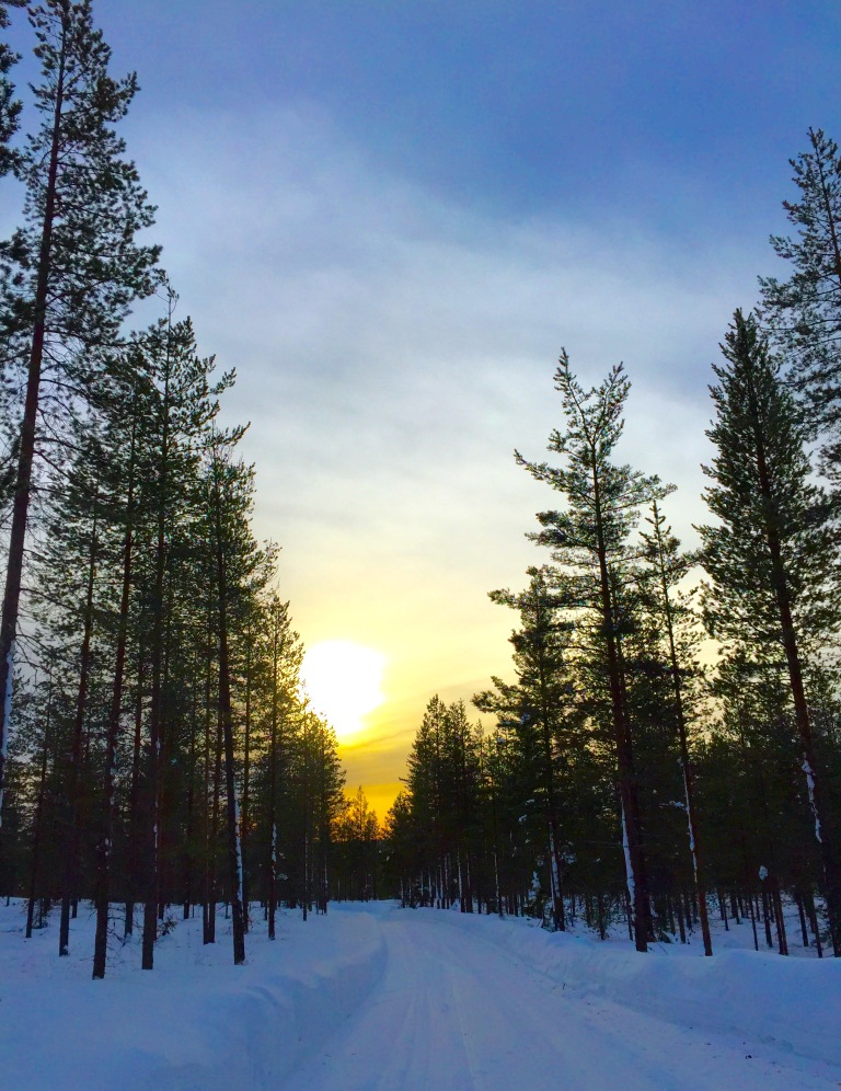 Sunset xc skiing through the forest.