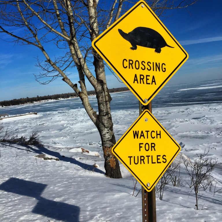 Watch out for those turtles
