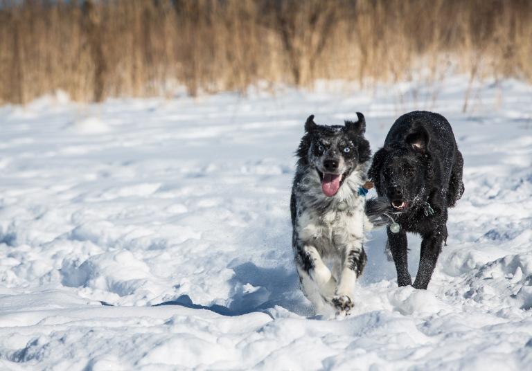 february 11, 2018 - wolves (25 of 25)